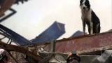 The Hero Dogs Of September 11
