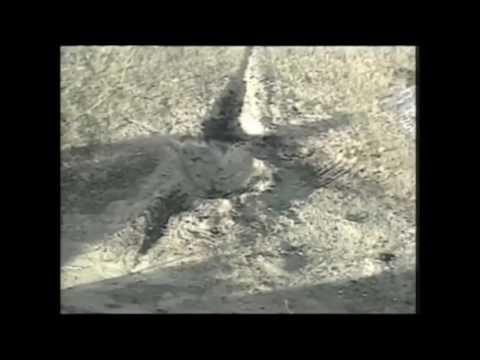 Flight 93 news report on 9/11 at 9:30 pm